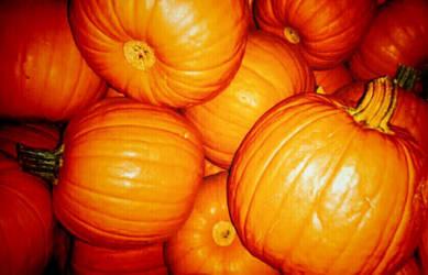 Pumpkins by Bishounen-Fangirl