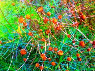 Wild by Bishounen-Fangirl