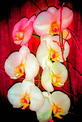 Orchids XIV by Bishounen-Fangirl