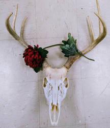 pretty deer skull by jazzyanathema