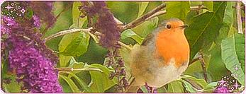 Robin Divider by Mavelle-Ealenyr
