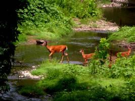 Wondering Deer by JustinCabell