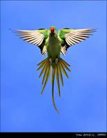 the handsome bird by VolkanAkgul