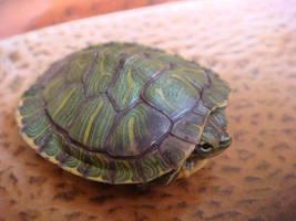 Turtle by mimsyaretheborogoves