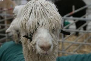 emo alpaca by zeldam