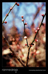 Plum Buds by rannedrop