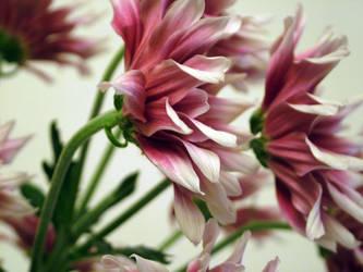 Pink flowers. 2 by whackeyjackie