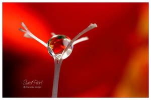 sweet pearl by hortensie