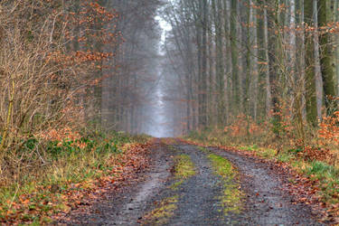 Aufm Waldweg by westi74