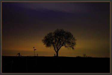Tree by westi74