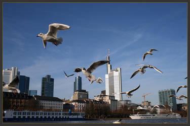 seagull by westi74