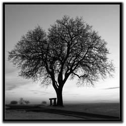 OLD TREE 2 by westi74