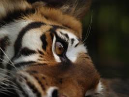 eye to freedom by tigerallied