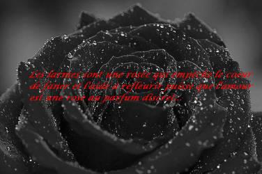Citation sur la rose by corzorodia
