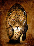 Leopard by Roma2011