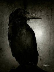 Raven by Roma2011
