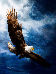 Eagle by Roma2011