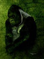 Gorilla by Roma2011