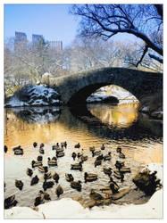 Ducks Lake by YOSHIMETAL