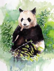 Panda by Laurlolz