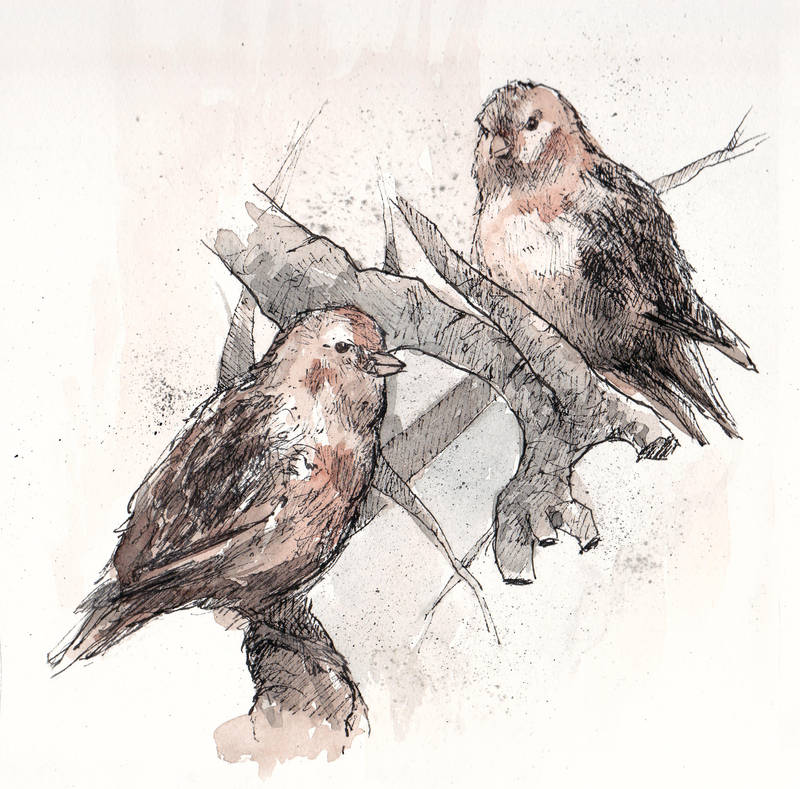 Wild Sparrows by Laurlolz