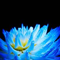 Blue Night by PhilippeGaravel