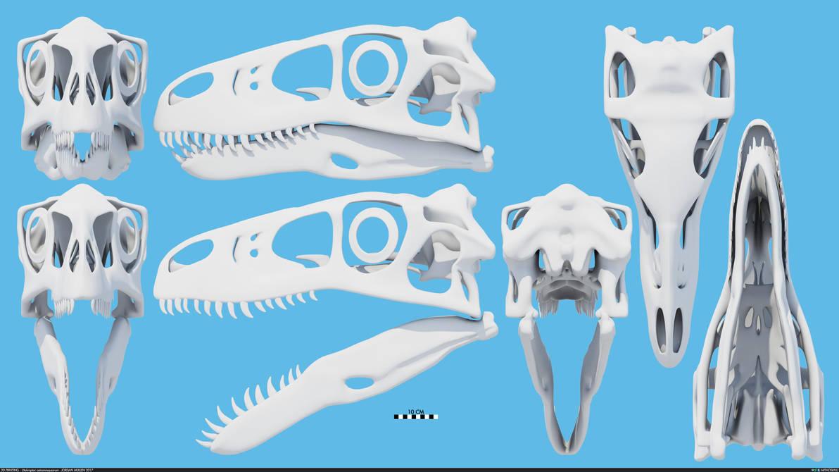 Utahraptor ostrommaysorum skull by MithosKuu