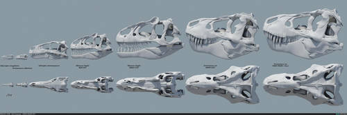 Theropod Skulls by MithosKuu