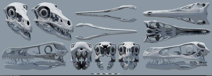 Velociraptor mongoliensis - Skull v4 by MithosKuu
