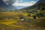 Rice Harvest Season by doruoprisan