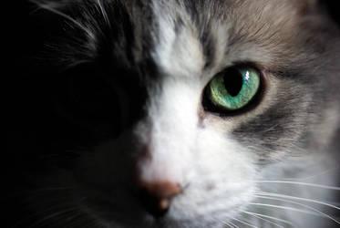 Rom, the Cat by SensibleGurus