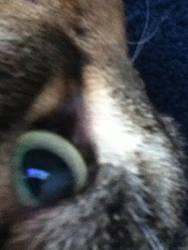 My cat [ close up] by mau5gurl01