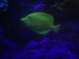 A Fish! by mau5gurl01