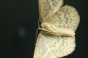 Moth Front by JusticeStock