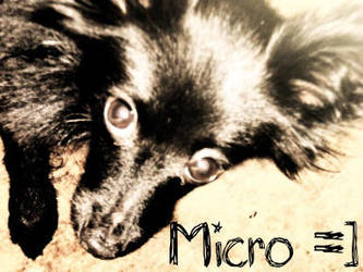 My puppy, Micro by iEmily-x
