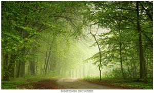 Mist by manroms