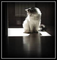 Sunny cat I by nSharky