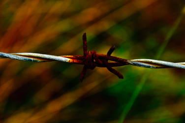 Barbwire by karolykeresztes