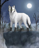 In the Night by Kuuda