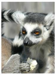 Lemur's Lunch by e-s-d
