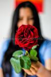 Rose gift by blacksunway