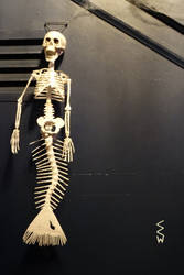 Authentic Photo of a Mermaid Skeleton Forgery by Crigger