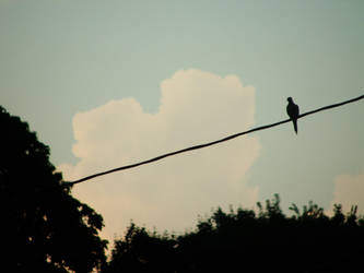 The Lone Dove by Funkyjeanz