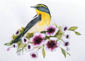 Narcissus flycatcher by Olya19