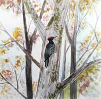 Black Woodpecker by Olya19