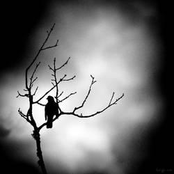 .: The Bird :. by sidh09