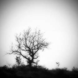 .: Standing alone :. by sidh09