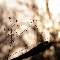 .: Sunday, lazy sunday :. by sidh09
