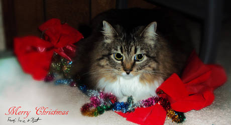 Christmas Kitty: Izzie by FirebornForm