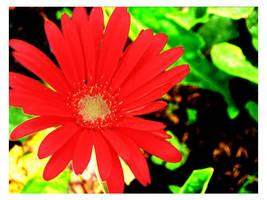 flower-1 by yahya12